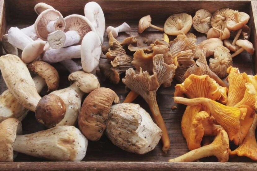 Freezing Mushrooms Your Complete Guide Nutritious Mushrooms,Call Center Work From Home Philippines